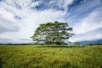 Kauai Tree of Life